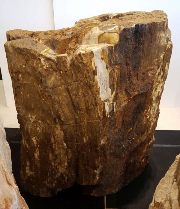 Grafsteen versteend hout 29142