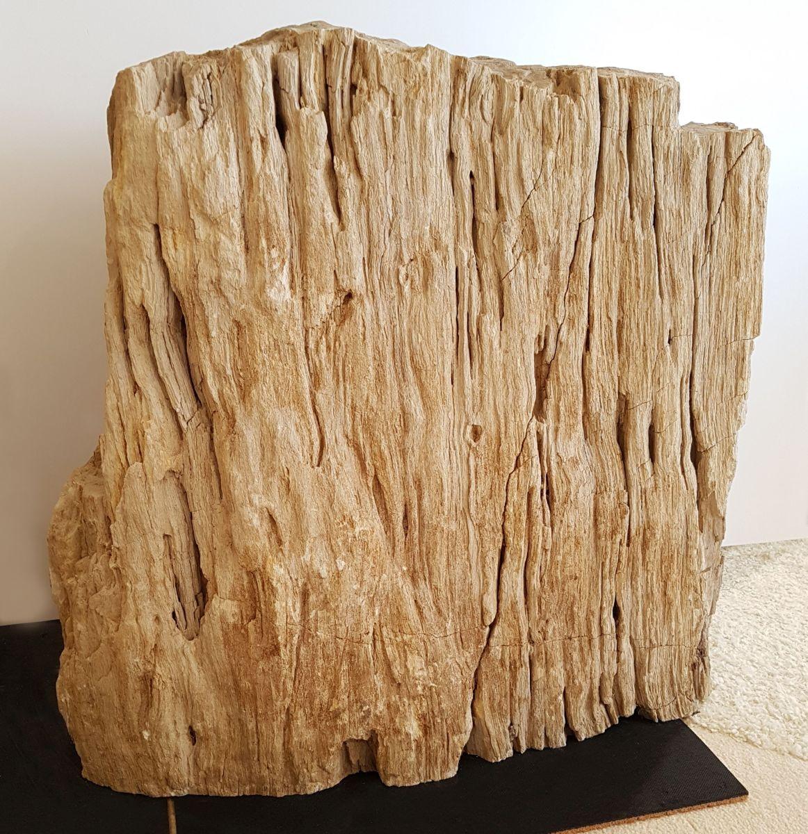Grafsteen versteend hout 30080