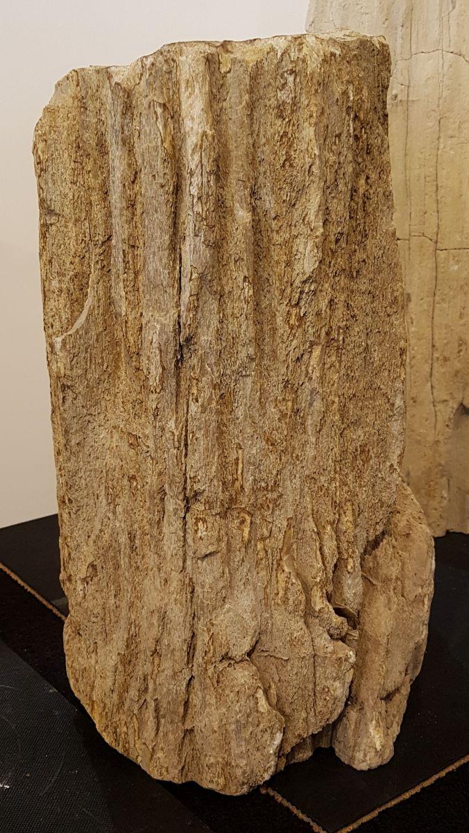 Grafsteen versteend hout 30092