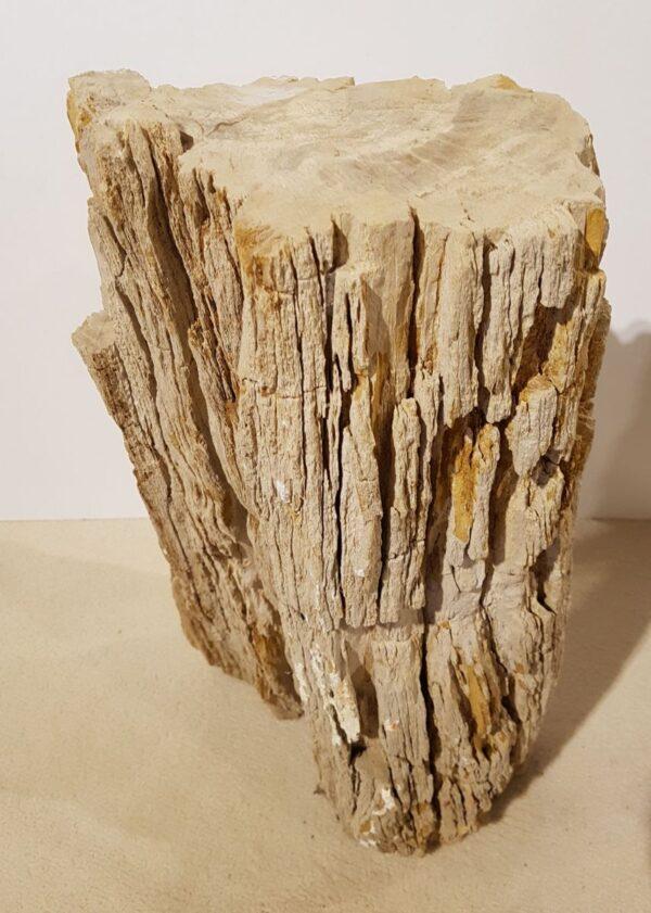 Grafsteen versteend hout 30110