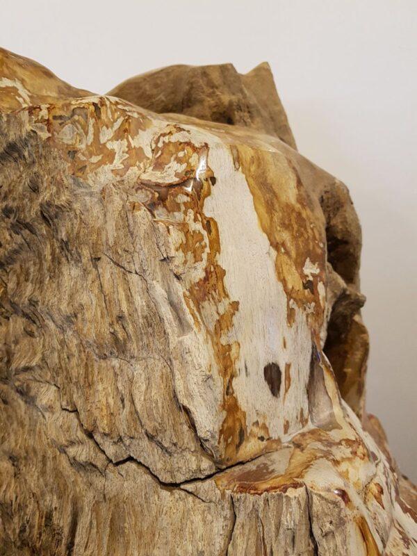 Grafsteen versteend hout 30117