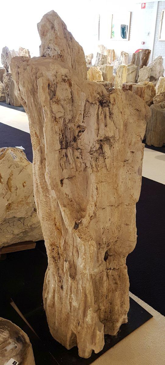 Grafsteen versteend hout 31104