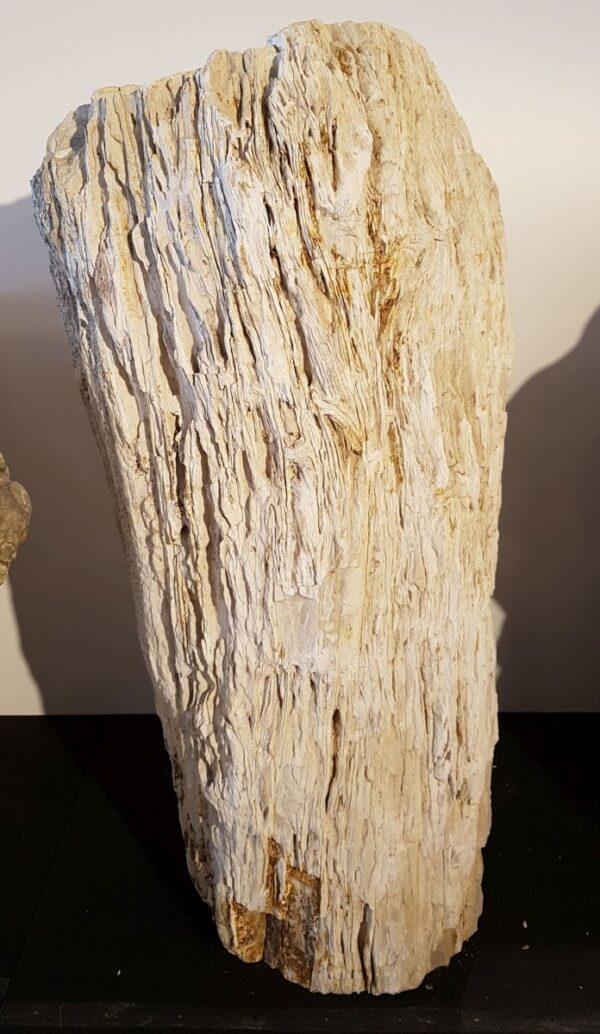 Lápida madera petrificada 29320