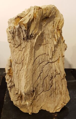 Lápida madera petrificada 30095