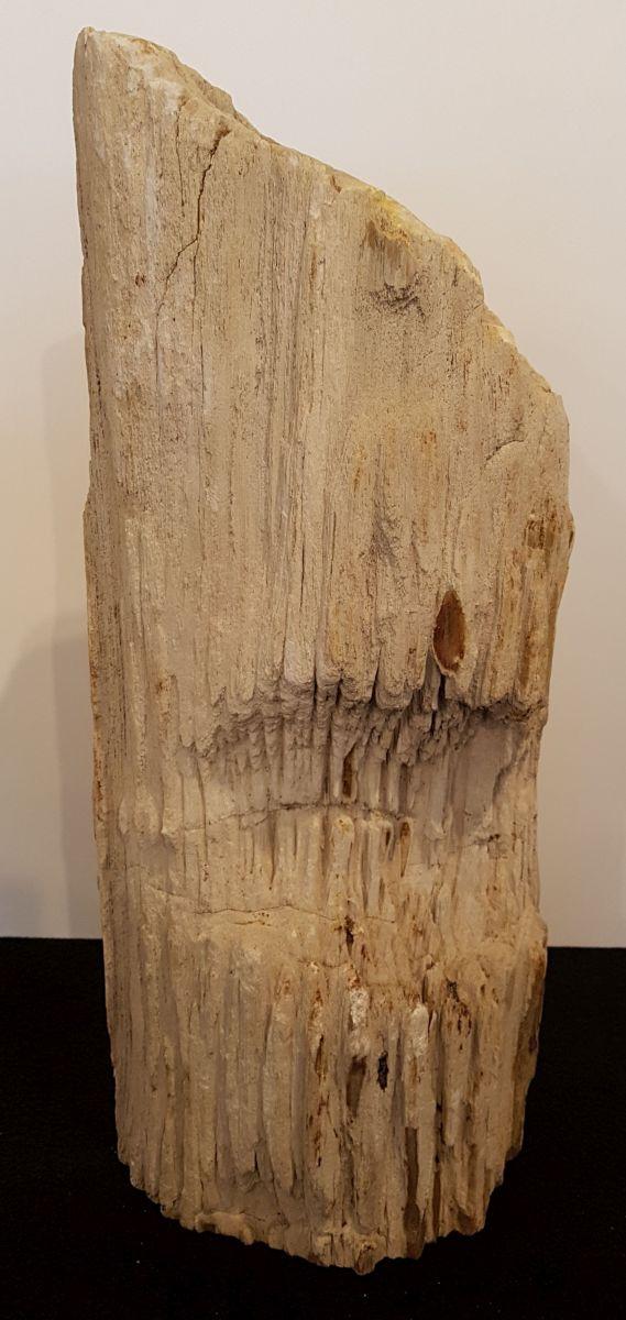 Lápida madera petrificada 30115