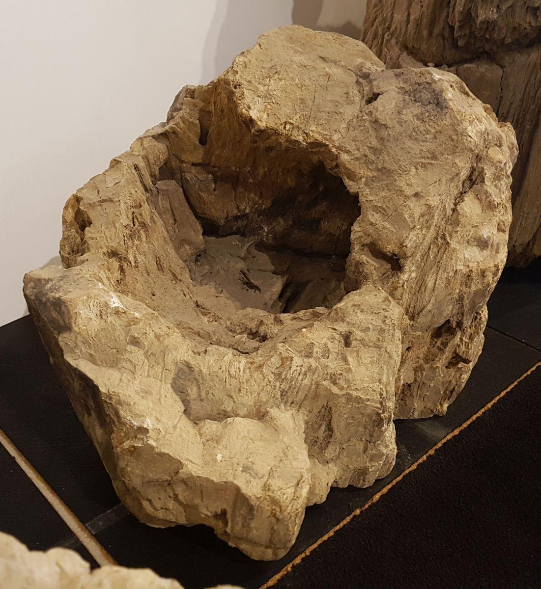 Lápida madera petrificada 31020