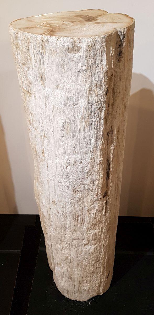 Lápida madera petrificada 32458