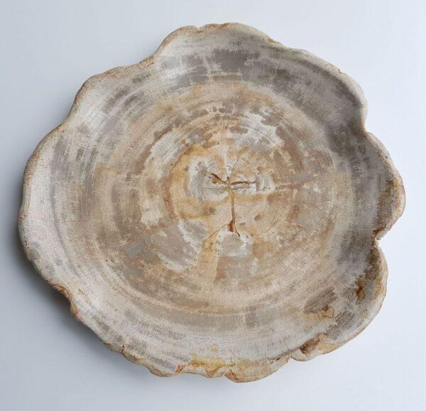 Plato madera petrificada 26032