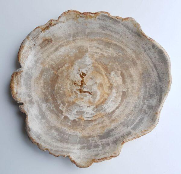 Plato madera petrificada 26033