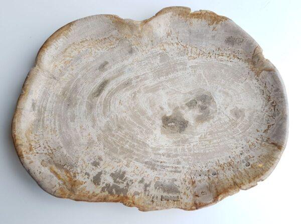 Plato madera petrificada 26065