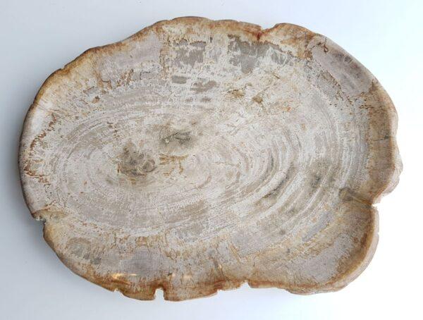 Plato madera petrificada 26066