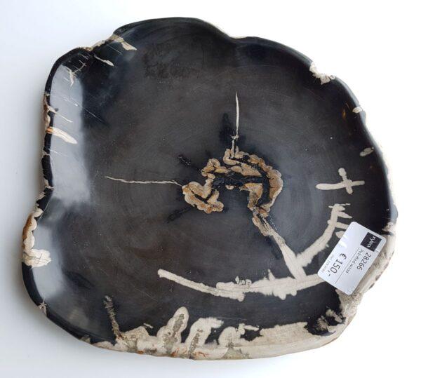 Plato madera petrificada 28266