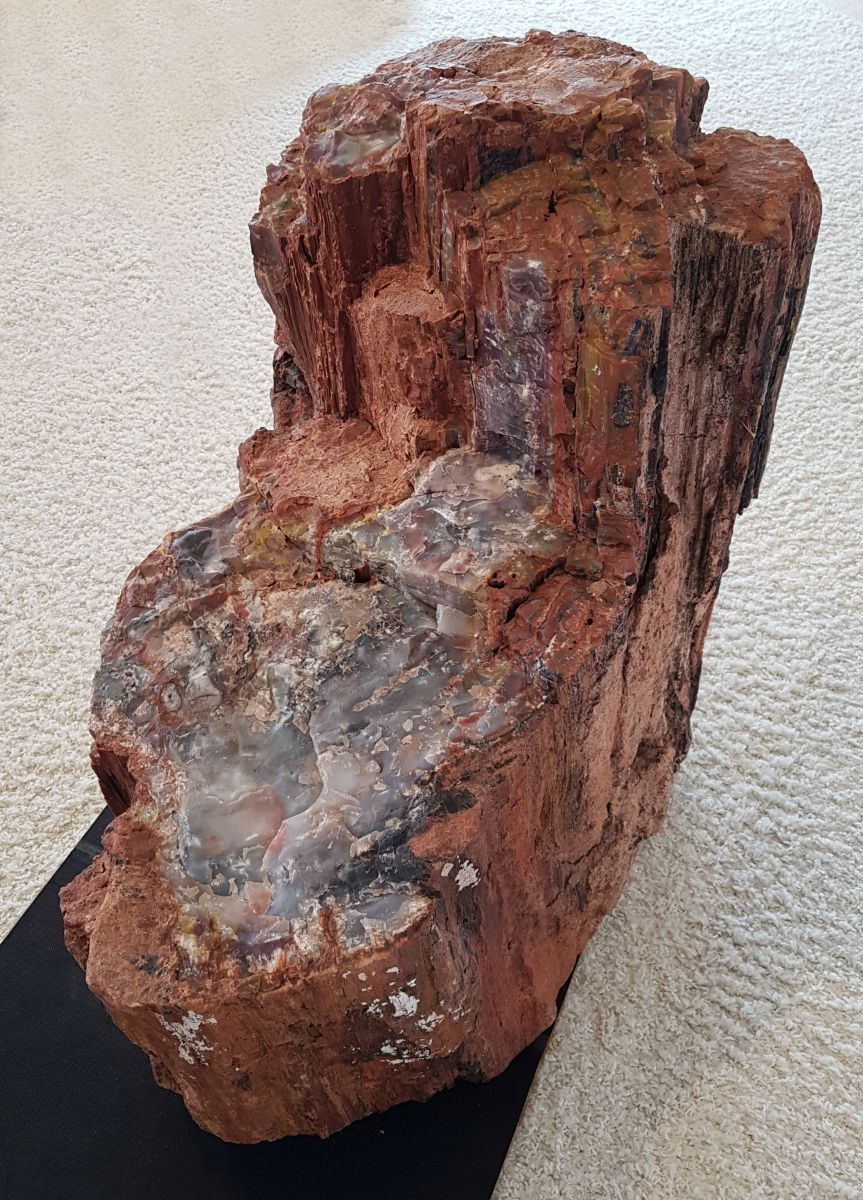Memorial stone petrified wood 22555