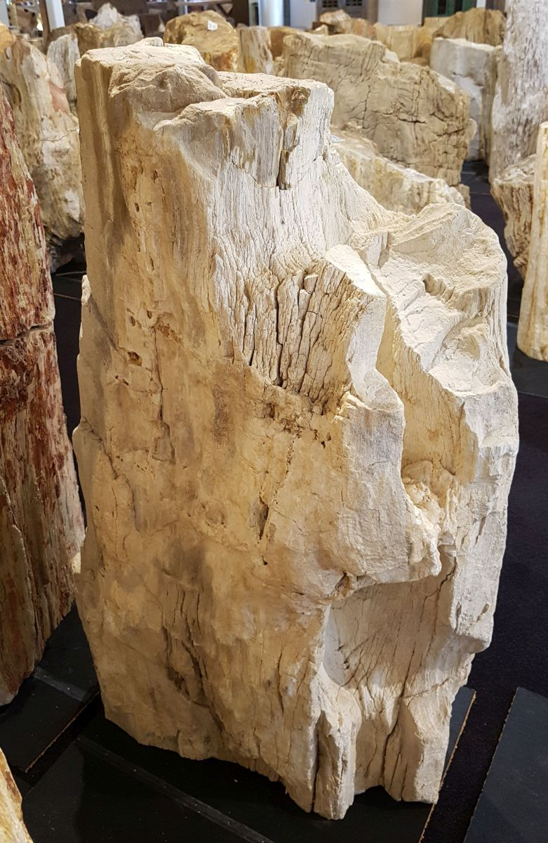 Memorial stone petrified wood 29063