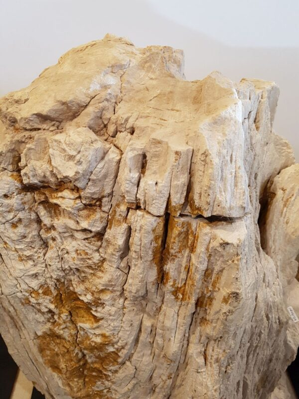 Memorial stone petrified wood 29099