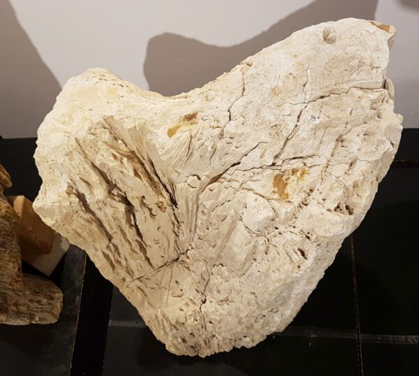 Memorial stone petrified wood 29102