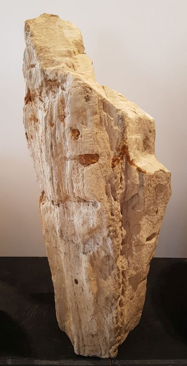 Memorial stone petrified wood 30088