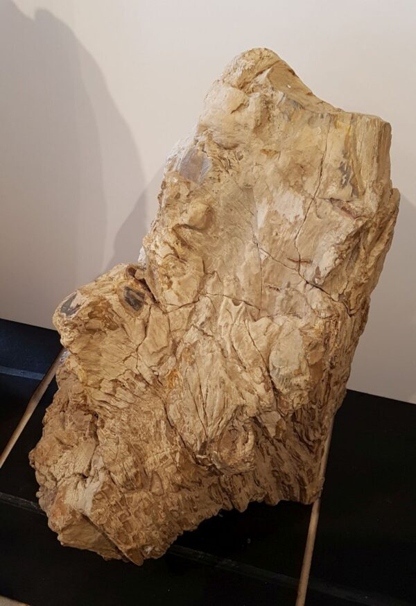 Memorial stone petrified wood 30089