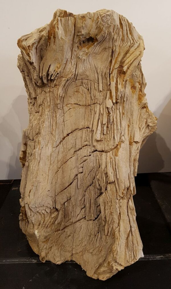 Memorial stone petrified wood 30095