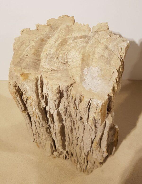 Memorial stone petrified wood 30110