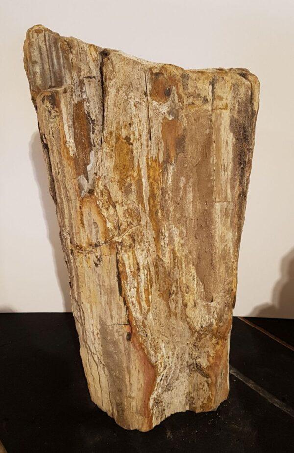 Memorial stone petrified wood 31118