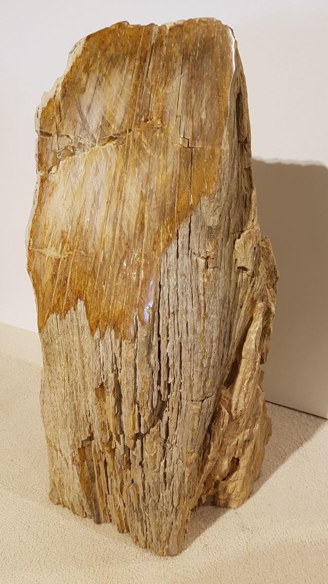 Memorial stone petrified wood 31119