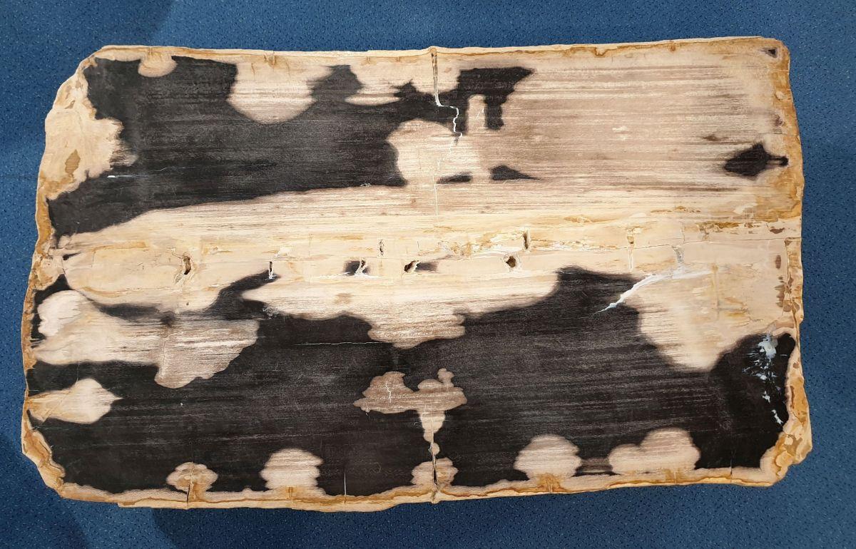 Mesa de centro madera petrificada 32280