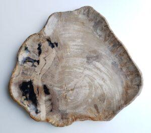 Plate petrified wood 22094