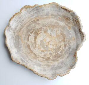 Plate petrified wood 26031