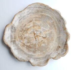 Plate petrified wood 26035