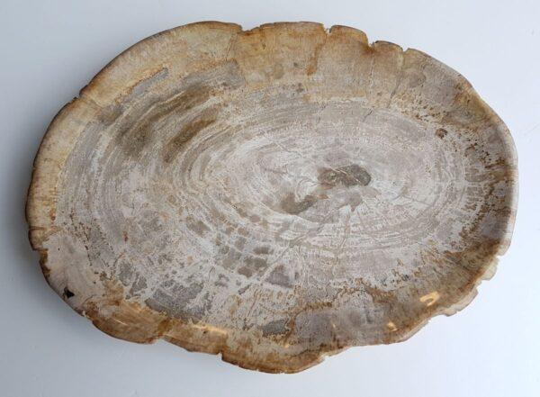 Plate petrified wood 26063