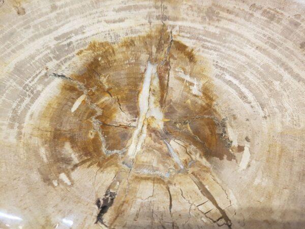 Plate petrified wood 28242