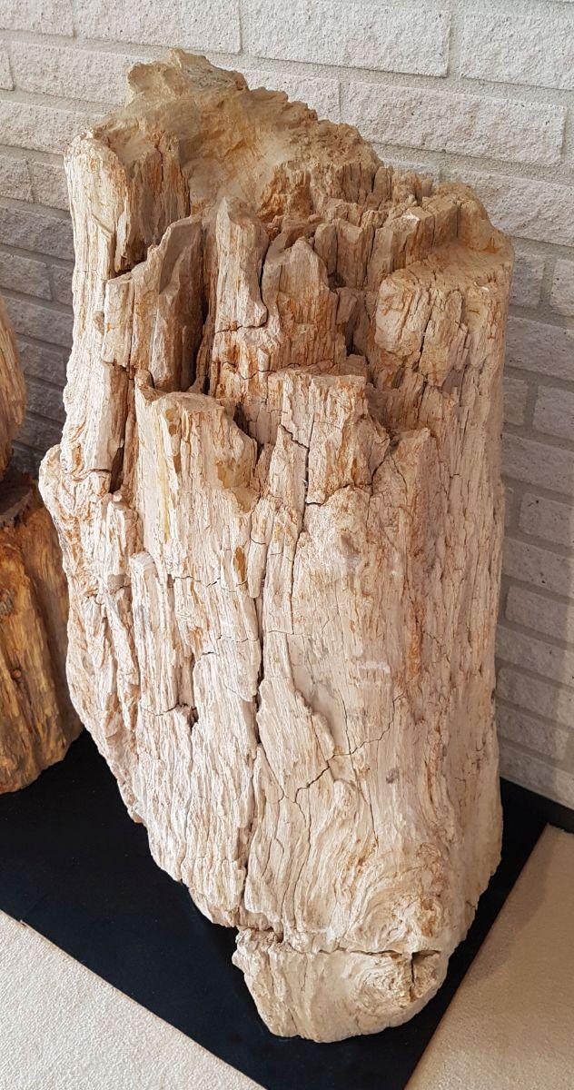 Pierre tombale bois pétrifié 101069