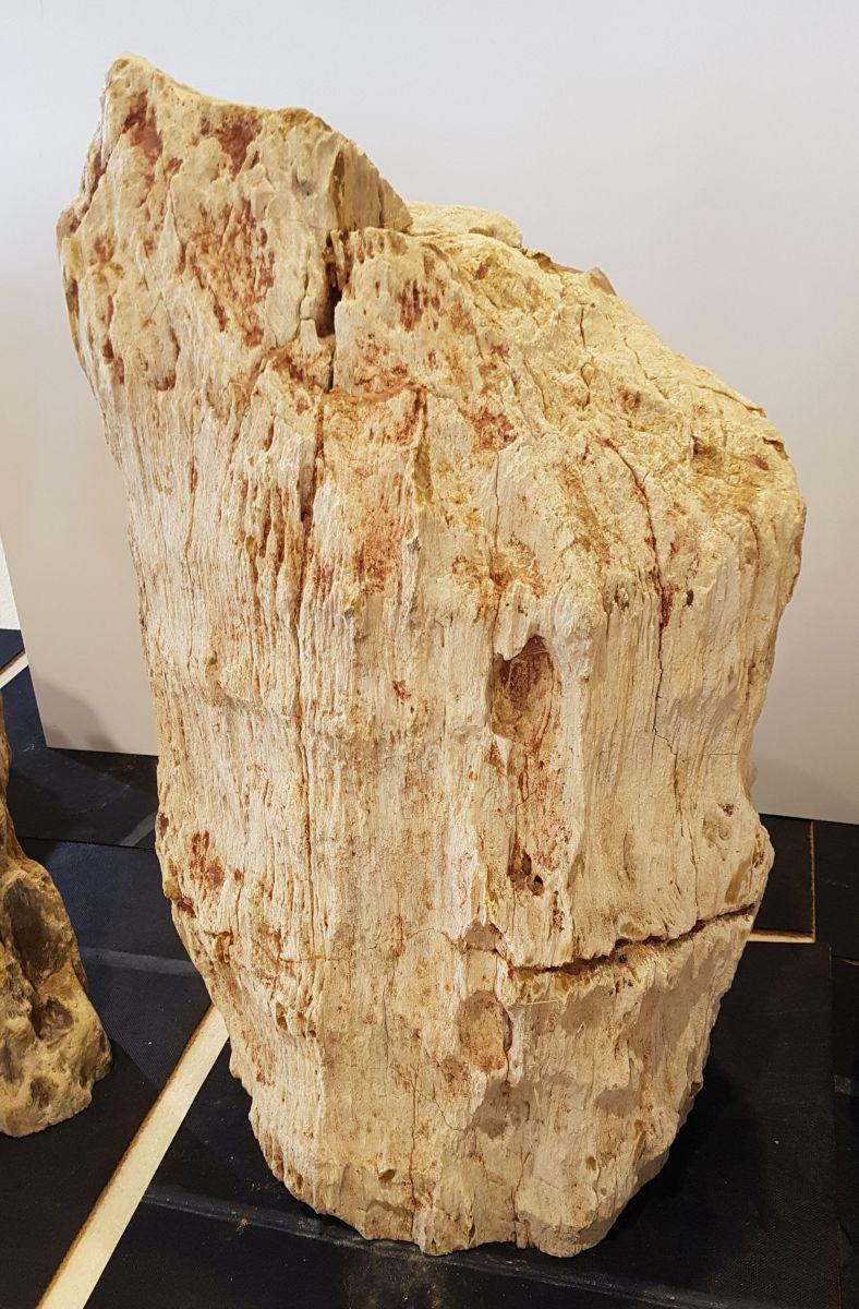Pierre tombale bois pétrifié 28364
