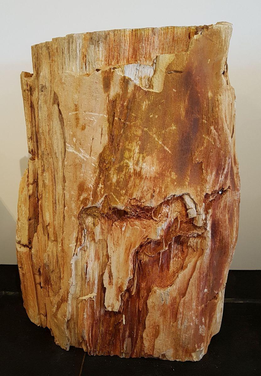 Pierre tombale bois pétrifié 28392