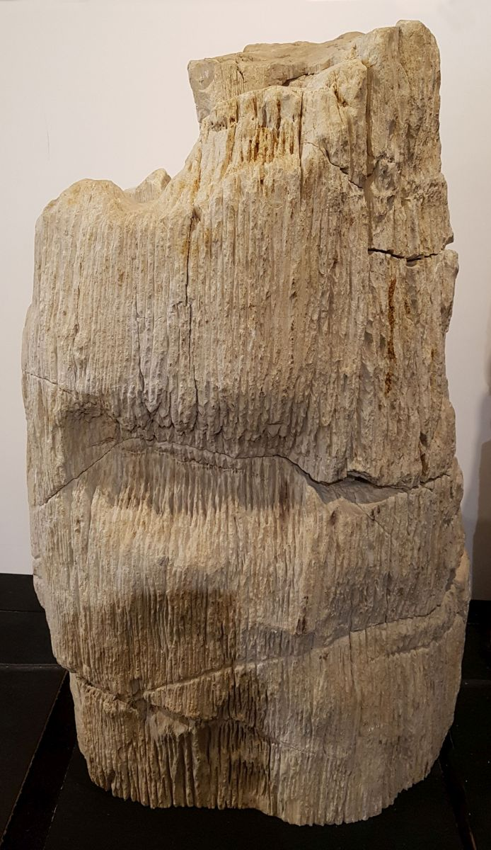 Pierre tombale bois pétrifié 29063