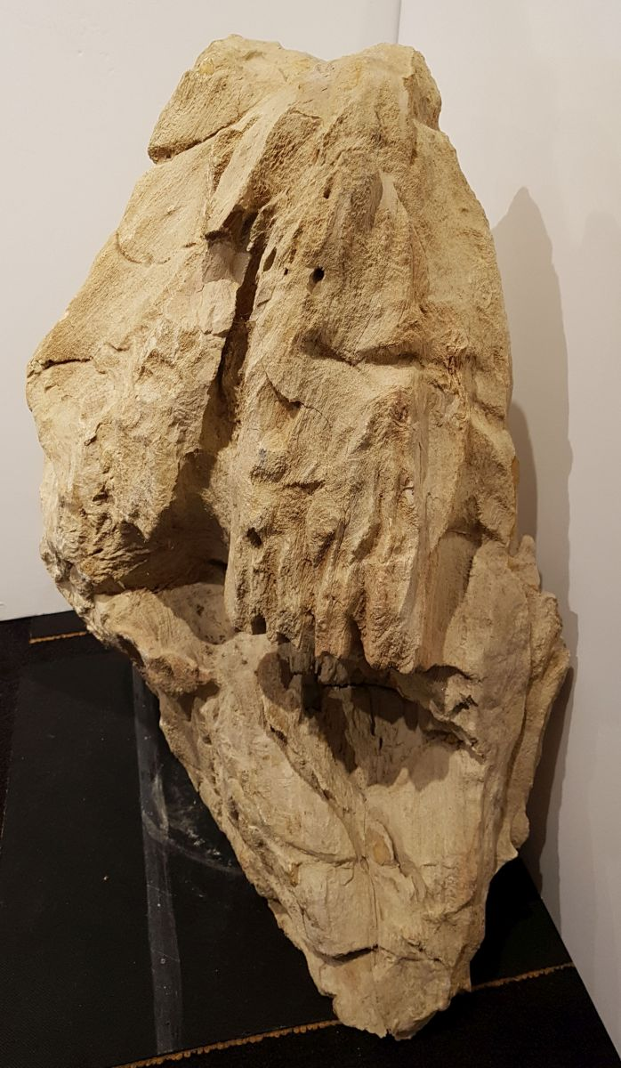 Pierre tombale bois pétrifié 29075