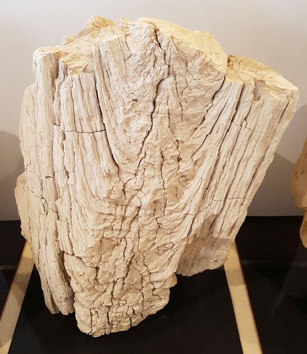 Pierre tombale bois pétrifié 29099