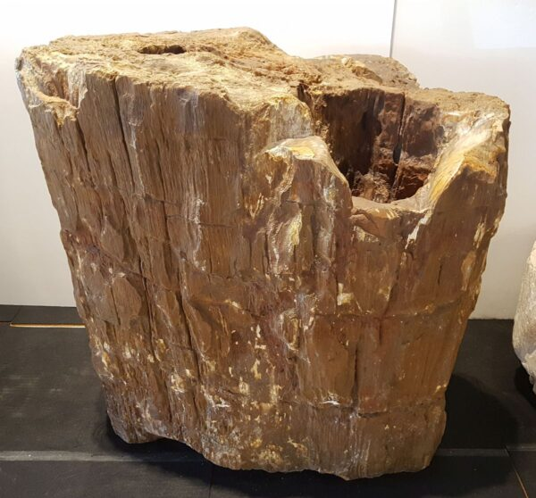 Pierre tombale bois pétrifié 29142