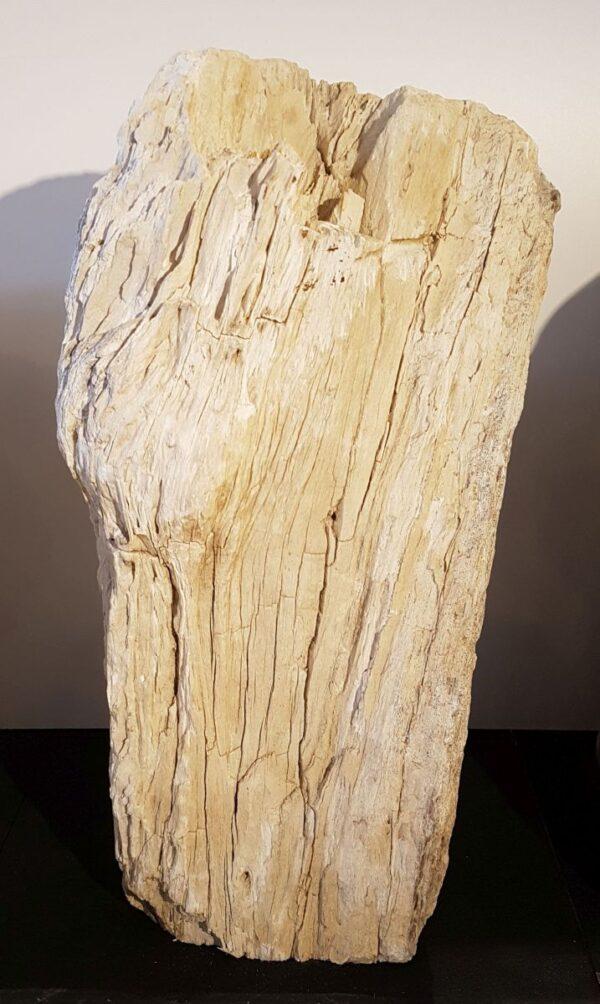 Pierre tombale bois pétrifié 29320