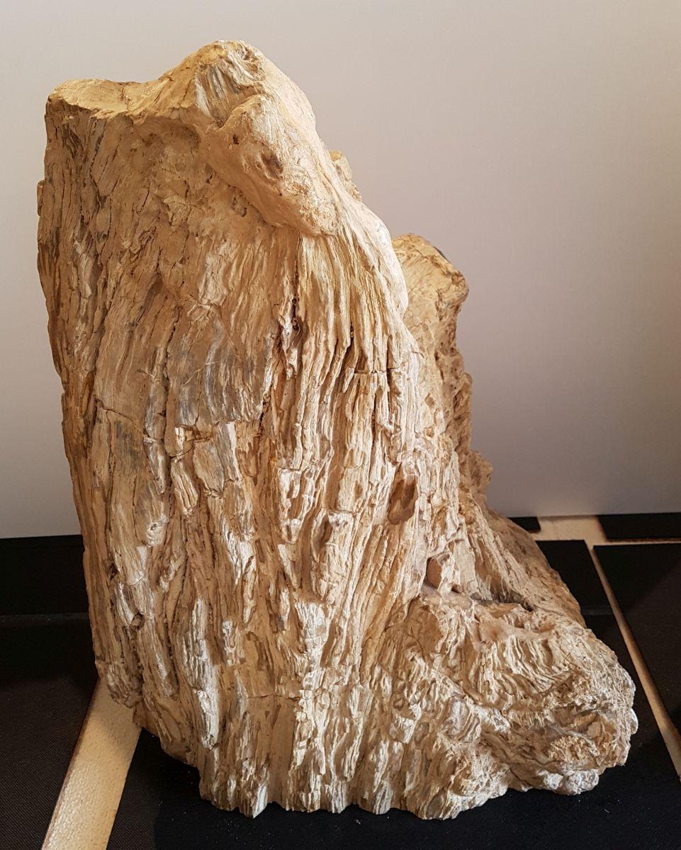 Pierre tombale bois pétrifié 30089