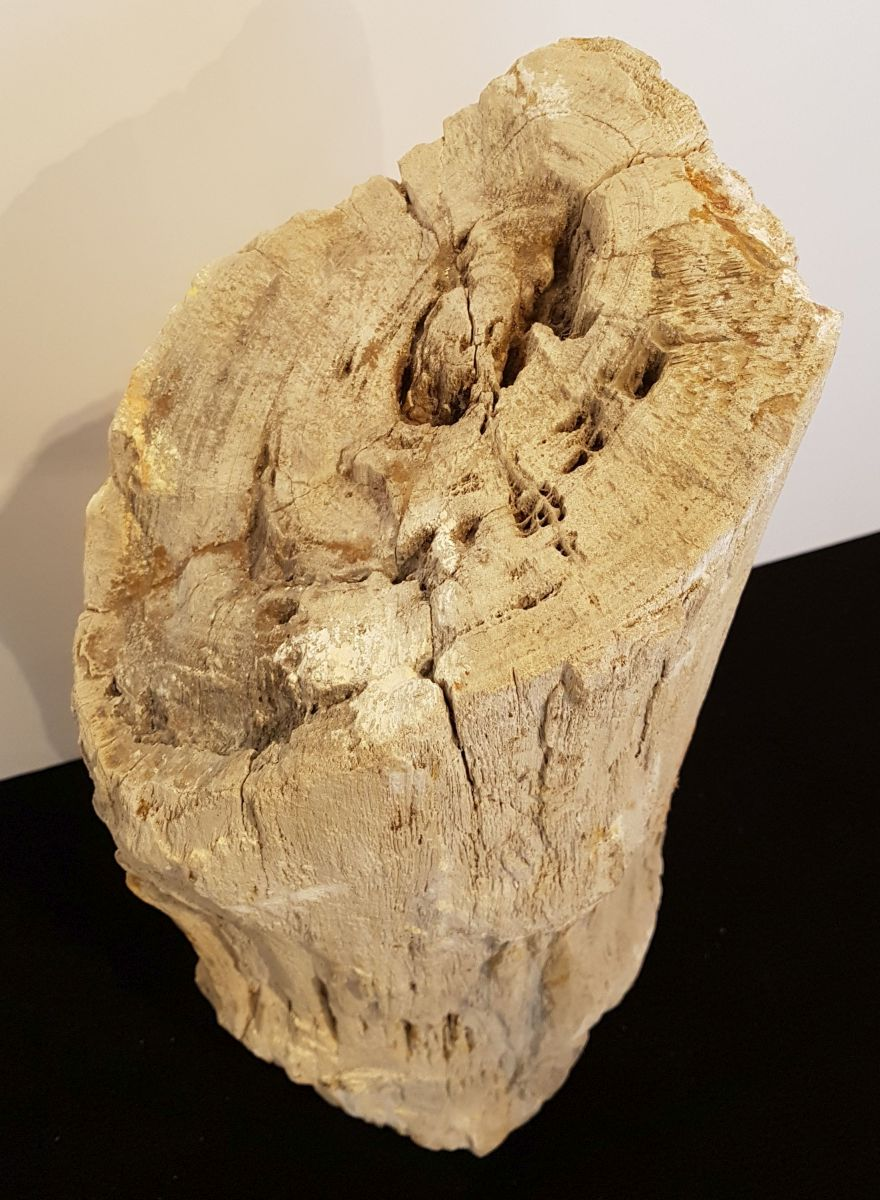 Pierre tombale bois pétrifié 30115
