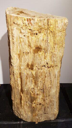 Pierre tombale bois pétrifié 30120