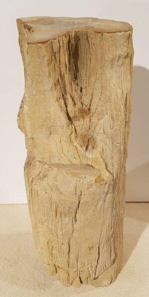 Pierre tombale bois pétrifié 31011