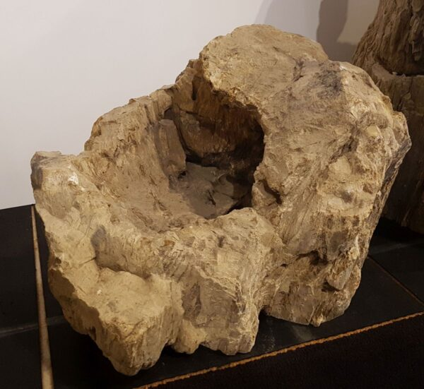 Pierre tombale bois pétrifié 31020