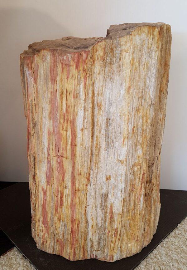 Pierre tombale bois pétrifié 31071