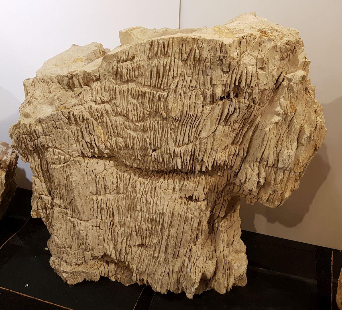 Pierre tombale bois pétrifié 31097