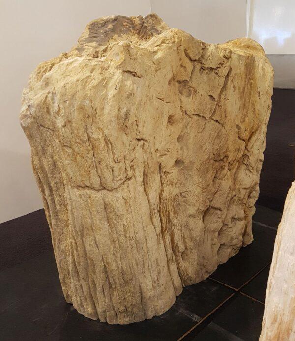 Pierre tombale bois pétrifié 31099
