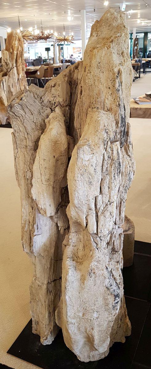 Pierre tombale bois pétrifié 31104