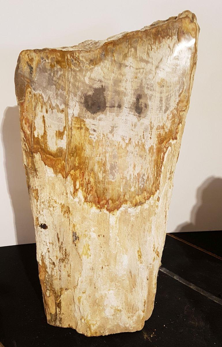 Pierre tombale bois pétrifié 31118